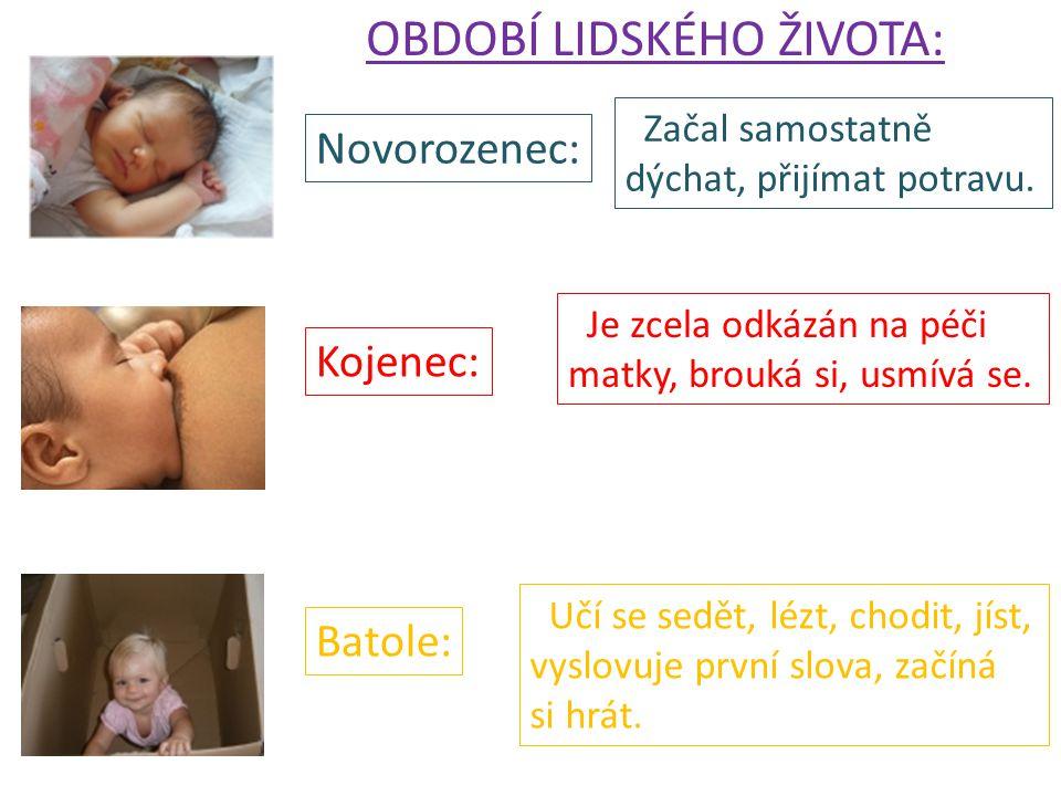 OBDOBÍ LIDSKÉHO ŽIVOTA: Novorozenec: Kojenec: Batole: Začal samostatně dýchat, přijímat potravu. Je zcela odkázán na péči matky, brouká si, usmívá se.