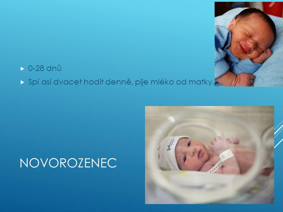 NOVOROZENEC  0-28 dnů  Spí asi dvacet hodit denně, pije mléko od matky.