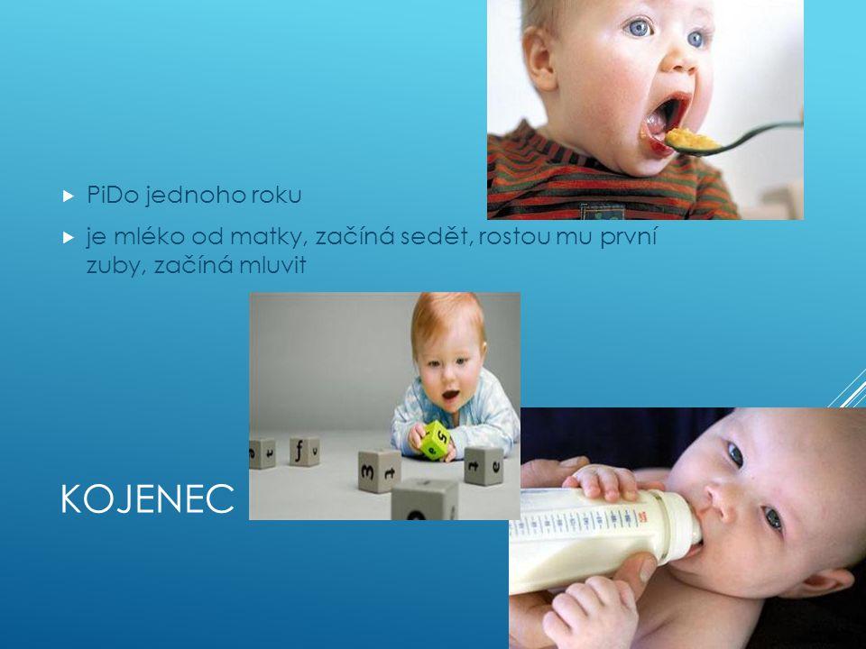 KOJENEC  PiDo jednoho roku  je mléko od matky, začíná sedět, rostou mu první zuby, začíná mluvit