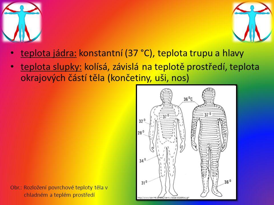 teplota jádra: konstantní (37 °C), teplota trupu a hlavy teplota slupky: kolísá, závislá na teplotě prostředí, teplota okrajových částí těla (končetin