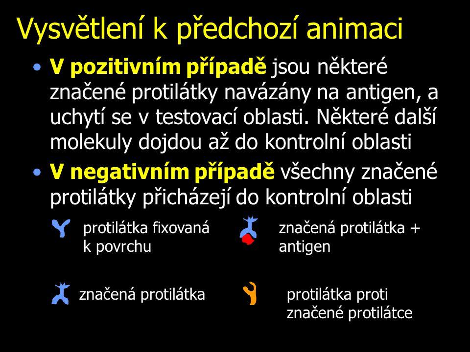 Vysvětlení k předchozí animaci V pozitivním případě jsou některé značené protilátky navázány na antigen, a uchytí se v testovací oblasti. Některé dalš