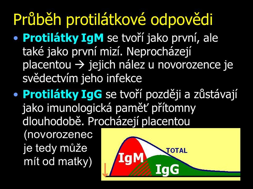 Průběh protilátkové odpovědi Protilátky IgM se tvoří jako první, ale také jako první mizí. Neprocházejí placentou  jejich nález u novorozence je svěd