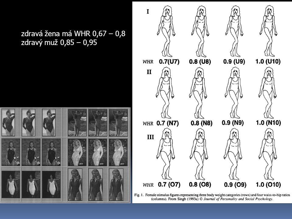zdravá žena má WHR 0,67 – 0,8 zdravý muž 0,85 – 0,95