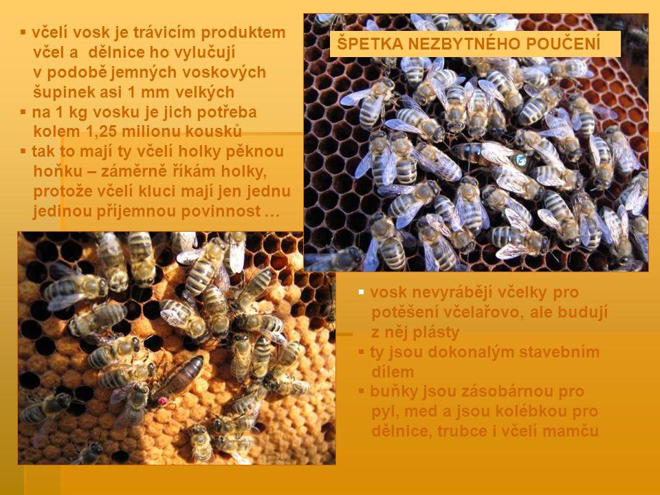  včelí vosk je trávicím produktem včel a dělnice ho vylučují v podobě jemných voskových šupinek asi 1 mm velkých  na 1 kg vosku je jich potřeba kolem 1,25 milionu kousků  tak to mají ty včelí holky pěknou hoňku – záměrně říkám holky, protože včelí kluci mají jen jednu jedinou příjemnou povinnost …  vosk nevyrábějí včelky pro potěšení včelařovo, ale budují z něj plásty  ty jsou dokonalým stavebním dílem  buňky jsou zásobárnou pro pyl, med a jsou kolébkou pro dělnice, trubce i včelí mamču ŠPETKA NEZBYTNÉHO POUČENÍ
