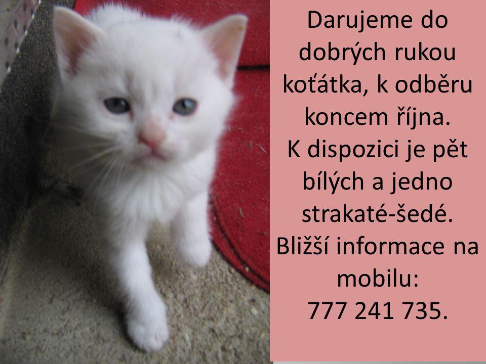 Darujeme do dobrých rukou koťátka, k odběru koncem října. K dispozici je pět bílých a jedno strakaté-šedé. Bližší informace na mobilu: 777 241 735.