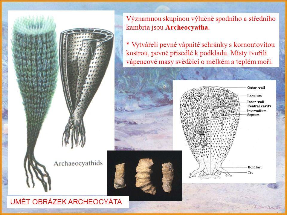 Významnou skupinou výlučně spodního a středního kambria jsou Archeocyatha.