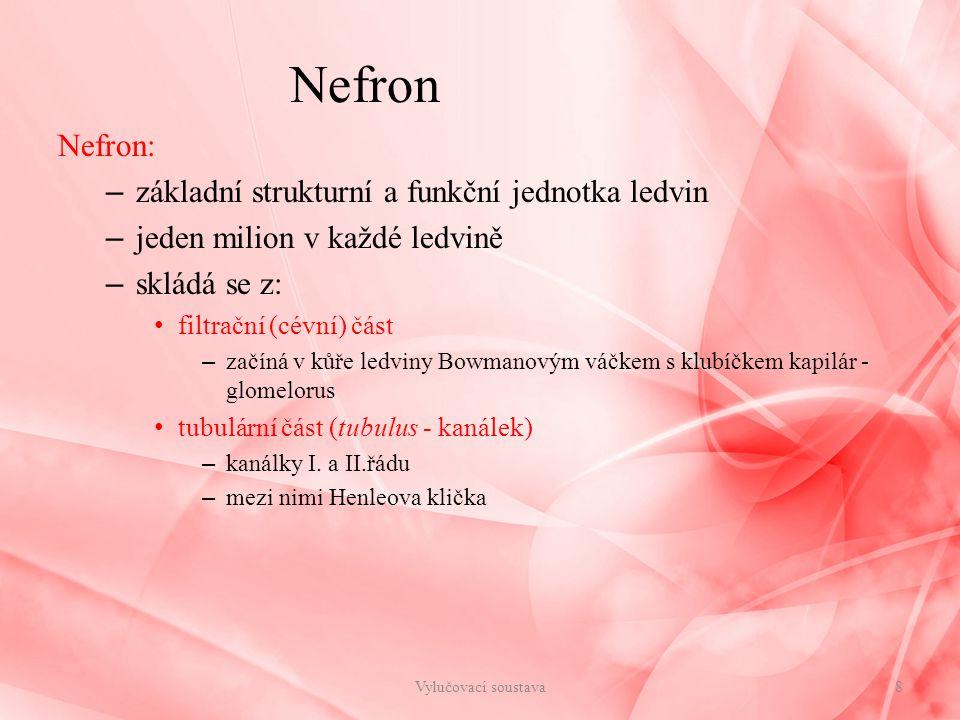 Nefron Nefron: – základní strukturní a funkční jednotka ledvin – jeden milion v každé ledvině – skládá se z: filtrační (cévní) část – začíná v kůře le