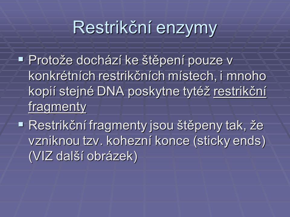 Restrikční enzymy  Protože dochází ke štěpení pouze v konkrétních restrikčních místech, i mnoho kopií stejné DNA poskytne tytéž restrikční fragmenty  Restrikční fragmenty jsou štěpeny tak, že vzniknou tzv.