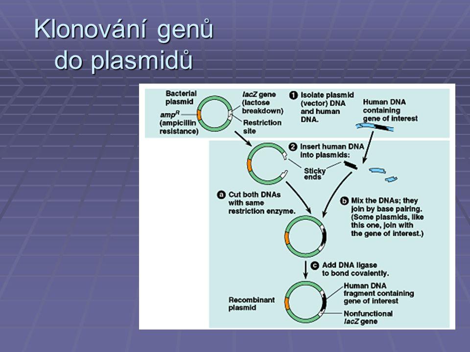 Klonování genů do plasmidů