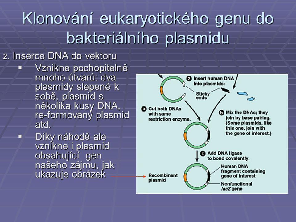 Klonování eukaryotického genu do bakteriálního plasmidu 2.