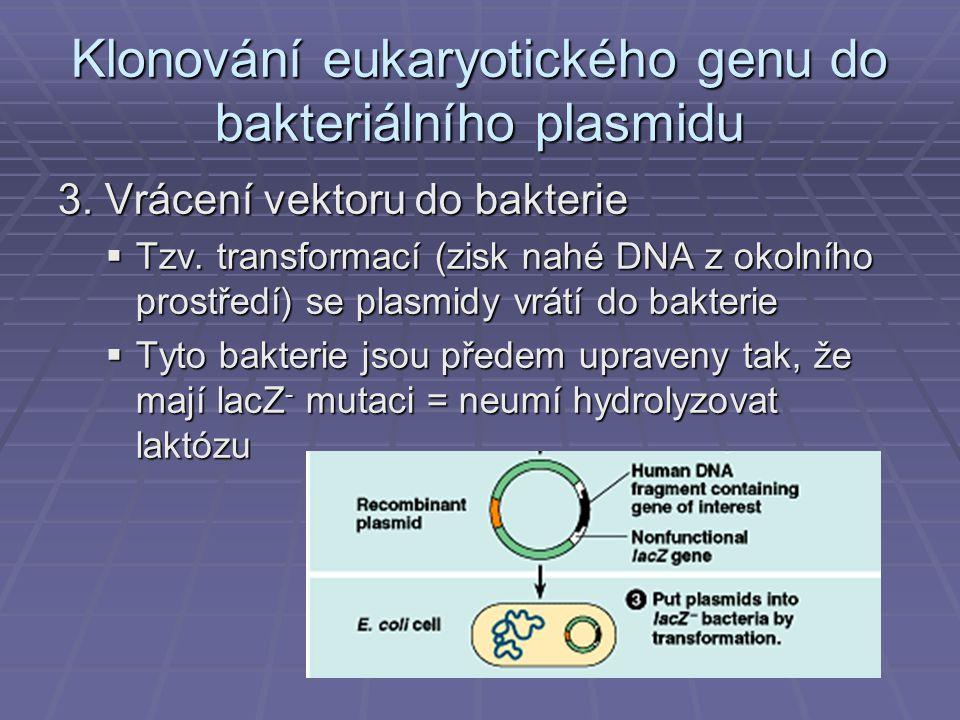 Klonování eukaryotického genu do bakteriálního plasmidu 3.
