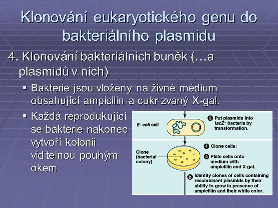 Klonování eukaryotického genu do bakteriálního plasmidu 4.
