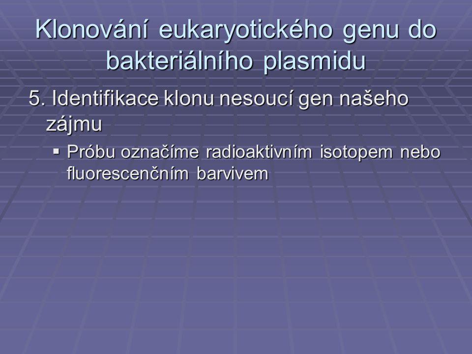 Klonování eukaryotického genu do bakteriálního plasmidu 5.