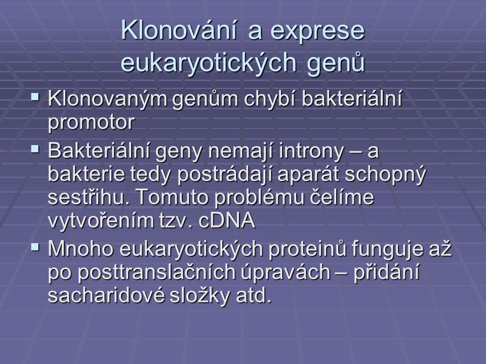 Klonování a exprese eukaryotických genů  Klonovaným genům chybí bakteriální promotor  Bakteriální geny nemají introny – a bakterie tedy postrádají aparát schopný sestřihu.