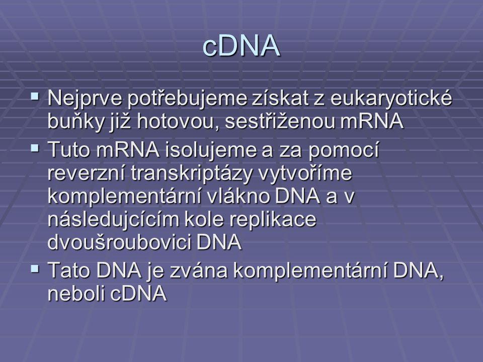 cDNA  Nejprve potřebujeme získat z eukaryotické buňky již hotovou, sestřiženou mRNA  Tuto mRNA isolujeme a za pomocí reverzní transkriptázy vytvoříme komplementární vlákno DNA a v následujcícím kole replikace dvoušroubovici DNA  Tato DNA je zvána komplementární DNA, neboli cDNA