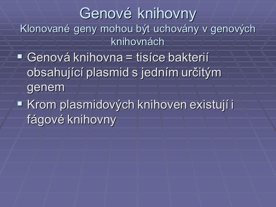 Genové knihovny Klonované geny mohou být uchovány v genových knihovnách  Genová knihovna = tisíce bakterií obsahující plasmid s jedním určitým genem  Krom plasmidových knihoven existují i fágové knihovny