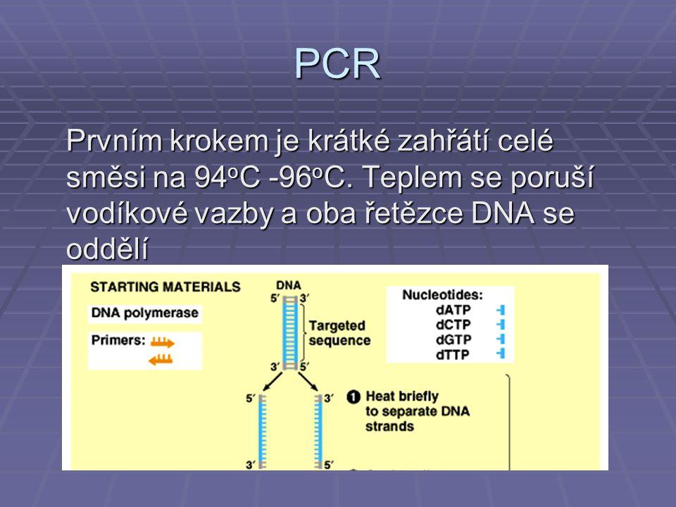PCR Prvním krokem je krátké zahřátí celé směsi na 94 o C -96 o C.
