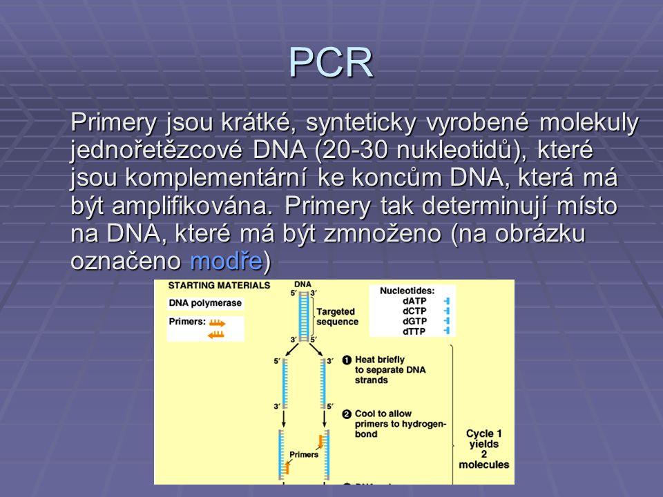PCR Primery jsou krátké, synteticky vyrobené molekuly jednořetězcové DNA (20-30 nukleotidů), které jsou komplementární ke koncům DNA, která má být amplifikována.