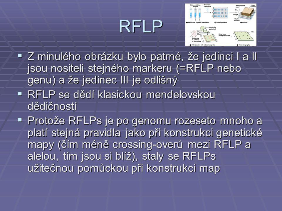 RFLP  Z minulého obrázku bylo patrné, že jedinci I a II jsou nositeli stejného markeru (=RFLP nebo genu) a že jedinec III je odlišný  RFLP se dědí klasickou mendelovskou dědičností  Protože RFLPs je po genomu rozeseto mnoho a platí stejná pravidla jako při konstrukci genetické mapy (čím méně crossing-overů mezi RFLP a alelou, tím jsou si blíž), staly se RFLPs užitečnou pomůckou při konstrukci map