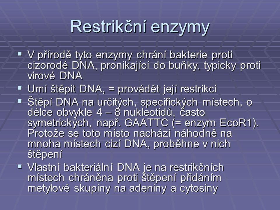Restrikční enzymy  V přírodě tyto enzymy chrání bakterie proti cizorodé DNA, pronikající do buňky, typicky proti virové DNA  Umí štěpit DNA, = provádět její restrikci  Štěpí DNA na určitých, specifických místech, o délce obvykle 4 – 8 nukleotidů, často symetrických, např.