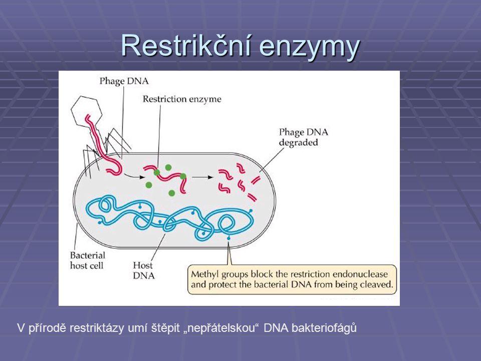 Analýza DNA a genomika