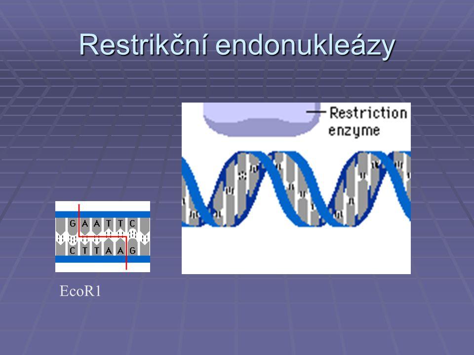 Genové knihovny Klonované geny mohou být uchovány v genových knihovnách