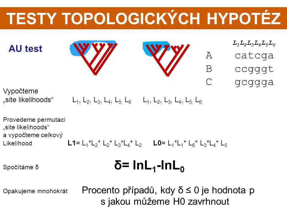 """TESTY TOPOLOGICKÝCH HYPOTÉZ AU test L 1 L 2 L 3 L 4 L 5 L 6 Acatcga Bccgggt Cgcggga Vypočteme """"site likelihoods"""" L 1, L 2, L 3, L 4, L 5, L 6 L 1, L 2"""
