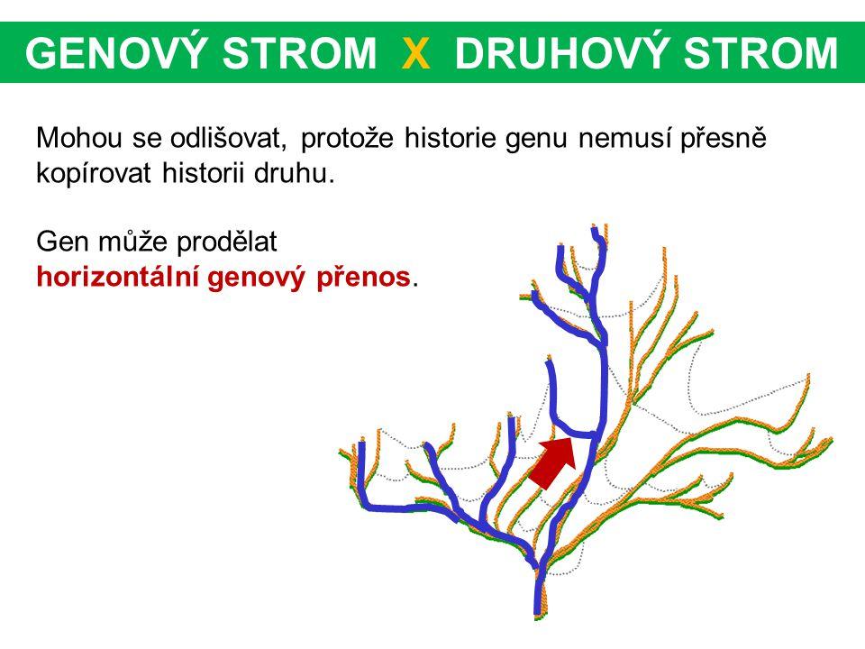 GENOVÝ STROM X DRUHOVÝ STROM Mohou se odlišovat, protože historie genu nemusí přesně kopírovat historii druhu. Gen může prodělat horizontální genový p