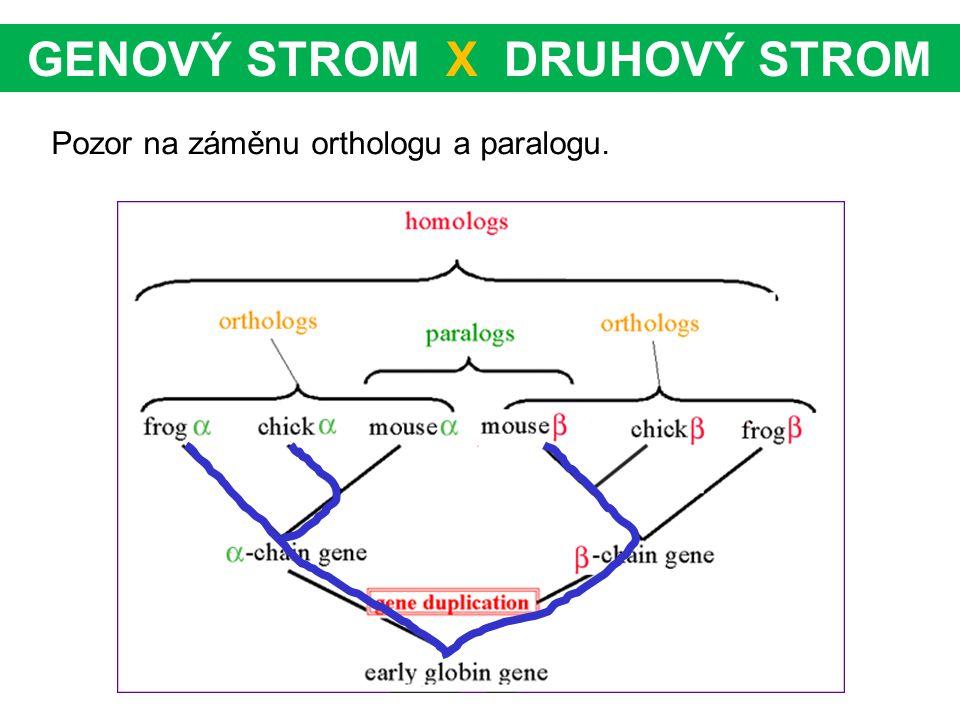 GENOVÝ STROM X DRUHOVÝ STROM Pozor na záměnu orthologu a paralogu.