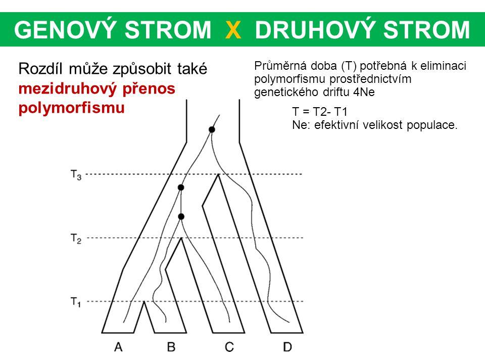 Rozdíl může způsobit také mezidruhový přenos polymorfismu GENOVÝ STROM X DRUHOVÝ STROM T = T2- T1 Ne: efektivní velikost populace. Průměrná doba (T) p