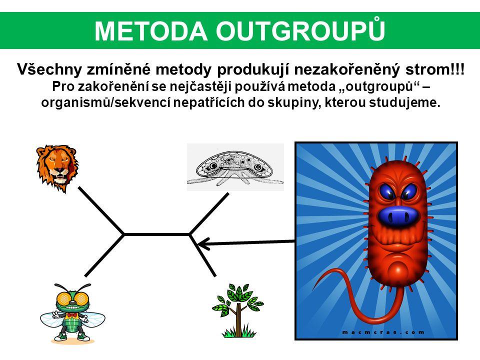 """Všechny zmíněné metody produkují nezakořeněný strom!!! Pro zakořenění se nejčastěji používá metoda """"outgroupů"""" – organismů/sekvencí nepatřících do sku"""