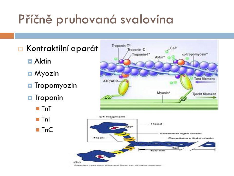 Příčně pruhovaná svalovina  Kontraktilní aparát  Aktin  Myozin  Tropomyozin  Troponin TnT TnI TnC