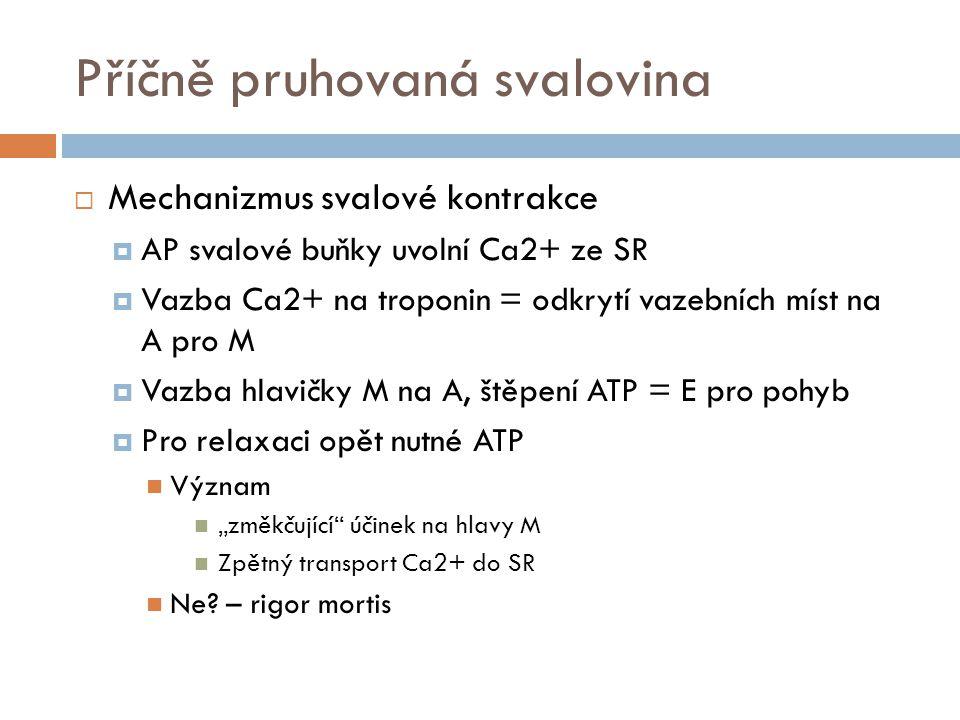 """Příčně pruhovaná svalovina  Mechanizmus svalové kontrakce  AP svalové buňky uvolní Ca2+ ze SR  Vazba Ca2+ na troponin = odkrytí vazebních míst na A pro M  Vazba hlavičky M na A, štěpení ATP = E pro pohyb  Pro relaxaci opět nutné ATP Význam """"změkčující účinek na hlavy M Zpětný transport Ca2+ do SR Ne."""