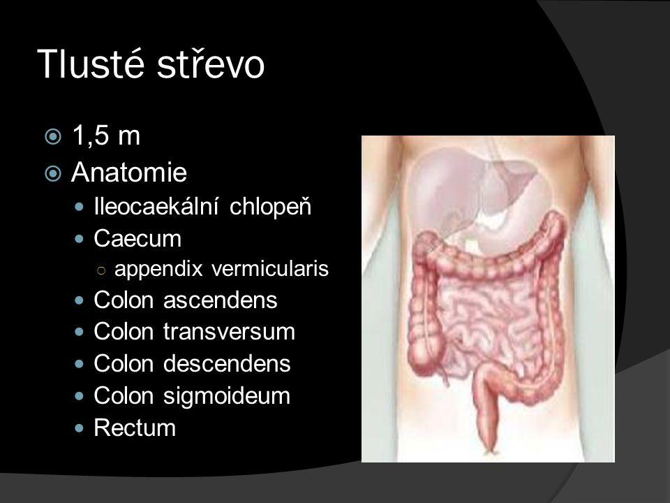 Tlusté střevo  1,5 m  Anatomie Ileocaekální chlopeň Caecum ○ appendix vermicularis Colon ascendens Colon transversum Colon descendens Colon sigmoide