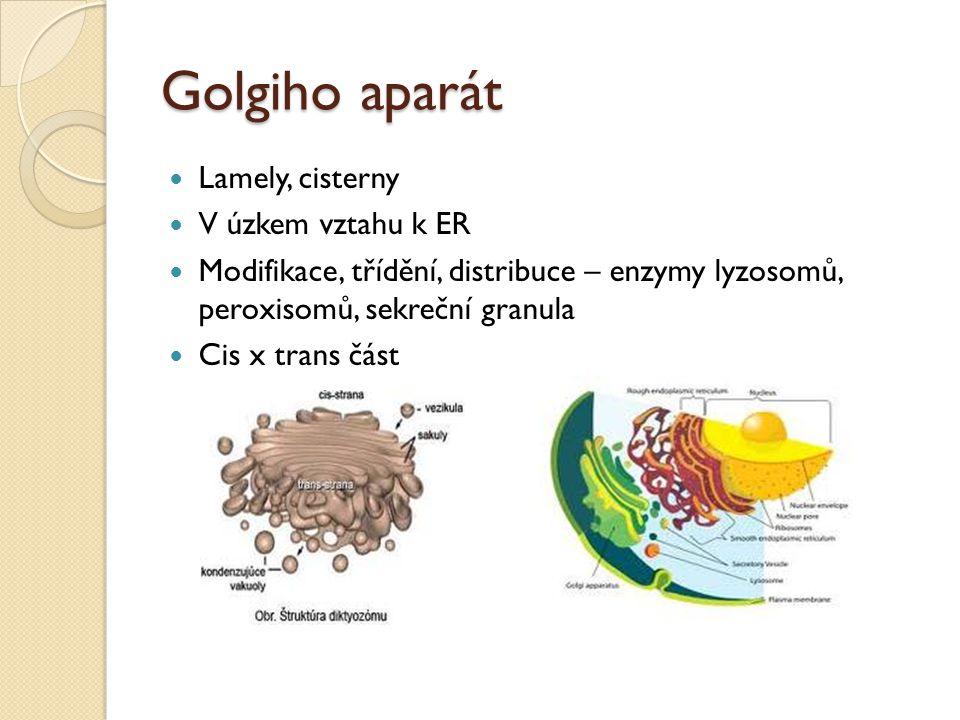 Golgiho aparát Lamely, cisterny V úzkem vztahu k ER Modifikace, třídění, distribuce – enzymy lyzosomů, peroxisomů, sekreční granula Cis x trans část