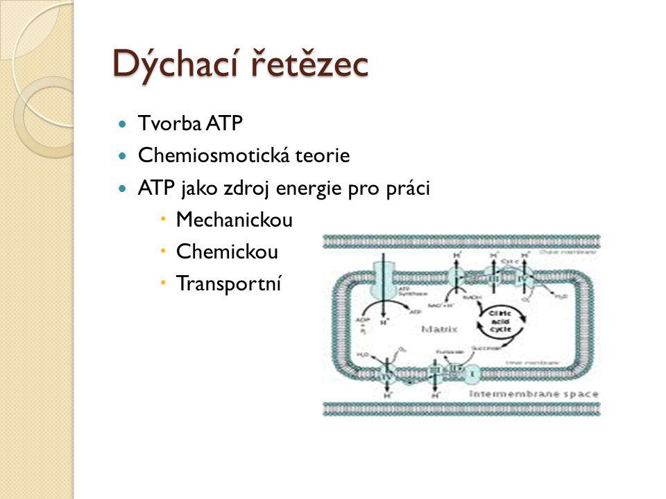 Dýchací řetězec Tvorba ATP Chemiosmotická teorie ATP jako zdroj energie pro práci  Mechanickou  Chemickou  Transportní