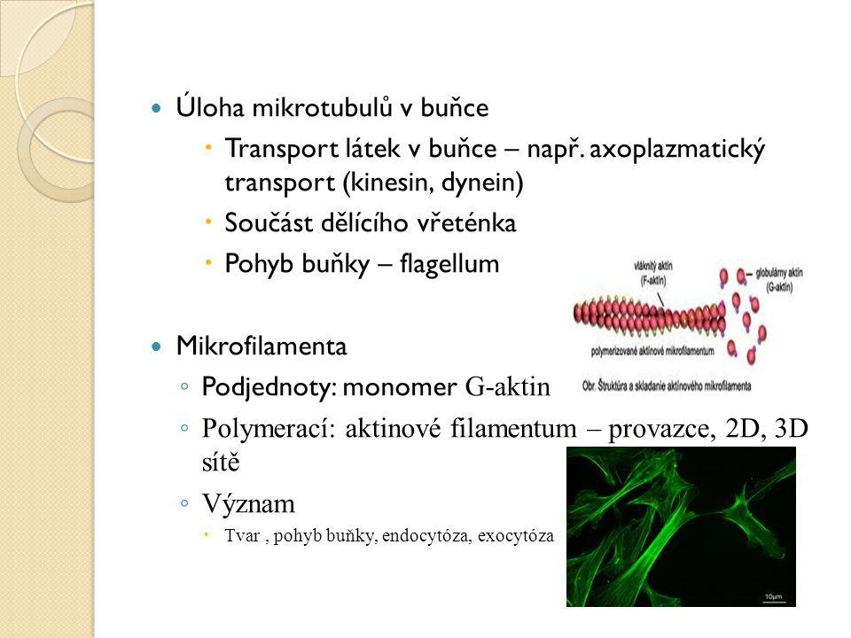 Úloha mikrotubulů v buňce  Transport látek v buňce – např. axoplazmatický transport (kinesin, dynein)  Součást dělícího vřeténka  Pohyb buňky – fla