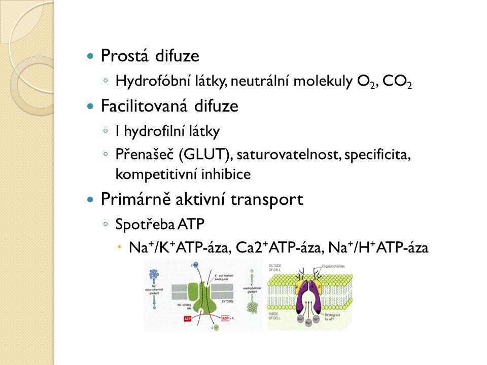 Prostá difuze ◦ Hydrofóbní látky, neutrální molekuly O 2, CO 2 Facilitovaná difuze ◦ I hydrofilní látky ◦ Přenašeč (GLUT), saturovatelnost, specificit