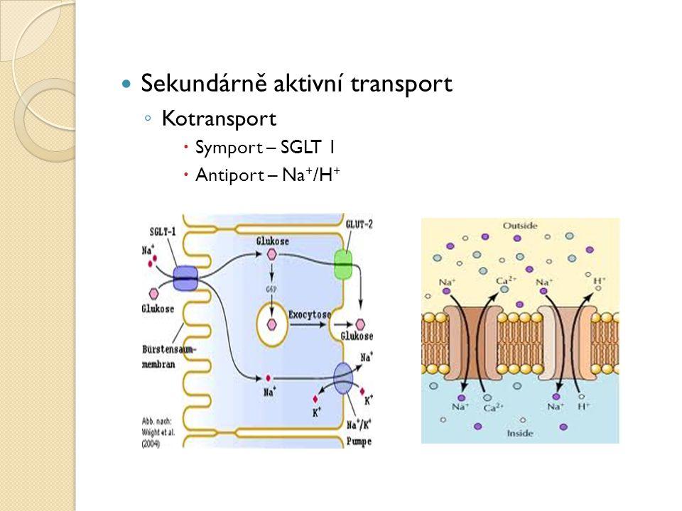 Sekundárně aktivní transport ◦ Kotransport  Symport – SGLT 1  Antiport – Na + /H +