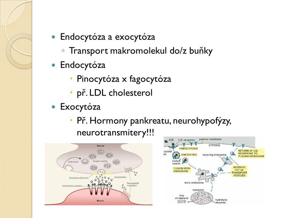 Endocytóza a exocytóza ◦ Transport makromolekul do/z buňky Endocytóza  Pinocytóza x fagocytóza  př. LDL cholesterol Exocytóza  Př. Hormony pankreat