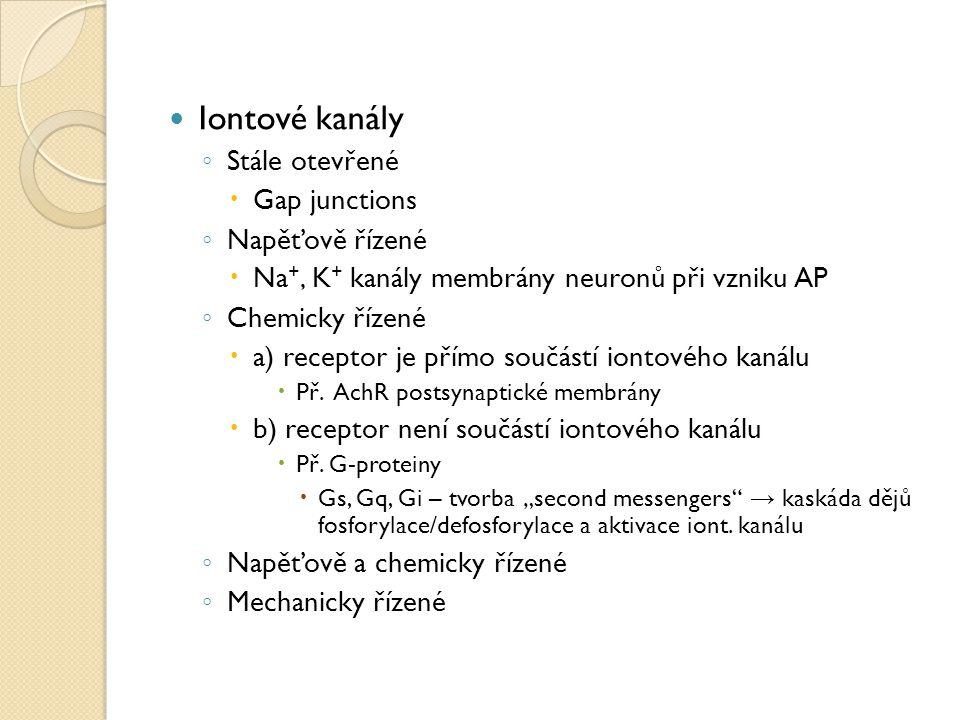 Iontové kanály ◦ Stále otevřené  Gap junctions ◦ Napěťově řízené  Na +, K + kanály membrány neuronů při vzniku AP ◦ Chemicky řízené  a) receptor je