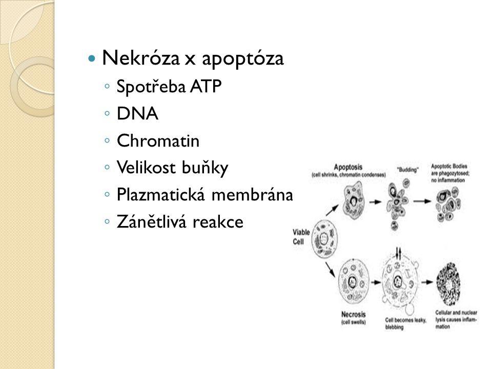 Nekróza x apoptóza ◦ Spotřeba ATP ◦ DNA ◦ Chromatin ◦ Velikost buňky ◦ Plazmatická membrána ◦ Zánětlivá reakce
