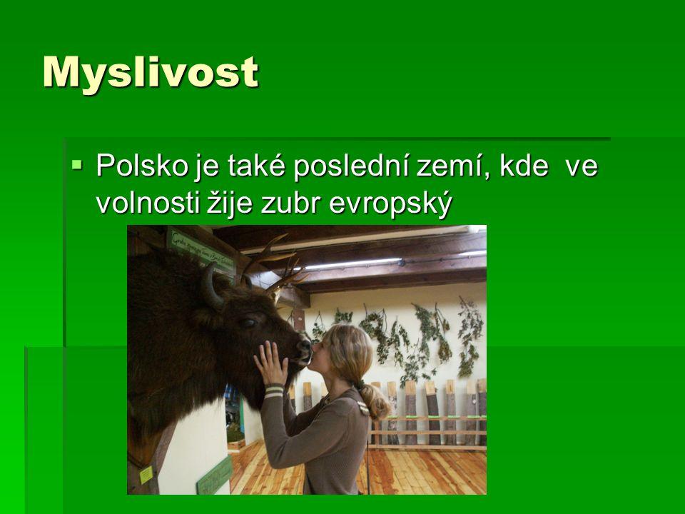 Myslivost  Polsko je také poslední zemí, kde ve volnosti žije zubr evropský