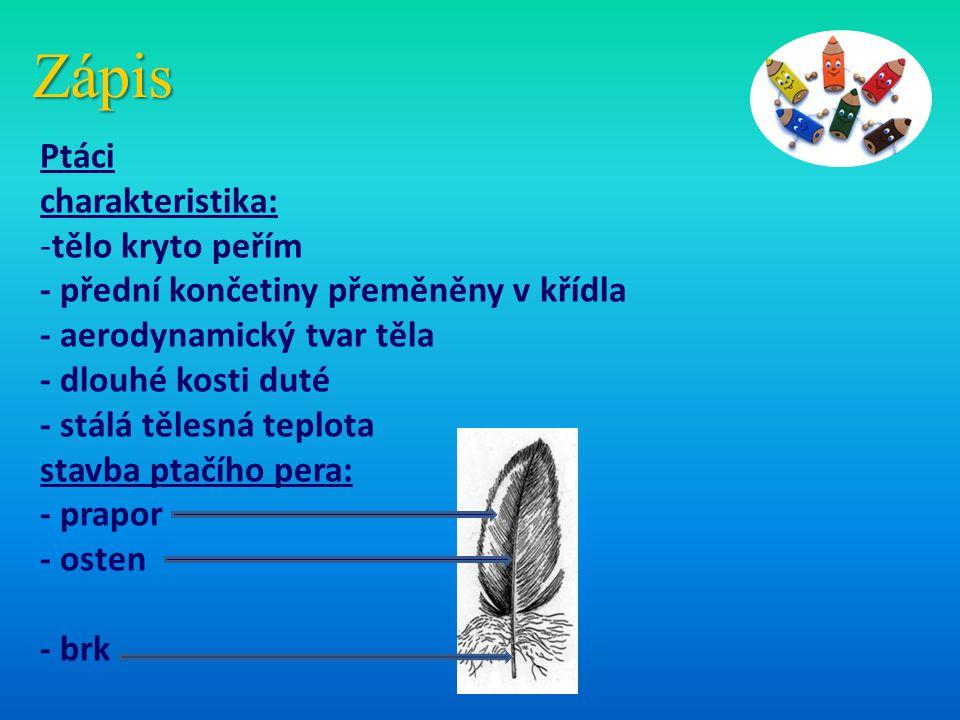 Zápis Ptáci charakteristika: -tělo kryto peřím - přední končetiny přeměněny v křídla - aerodynamický tvar těla - dlouhé kosti duté - stálá tělesná tep