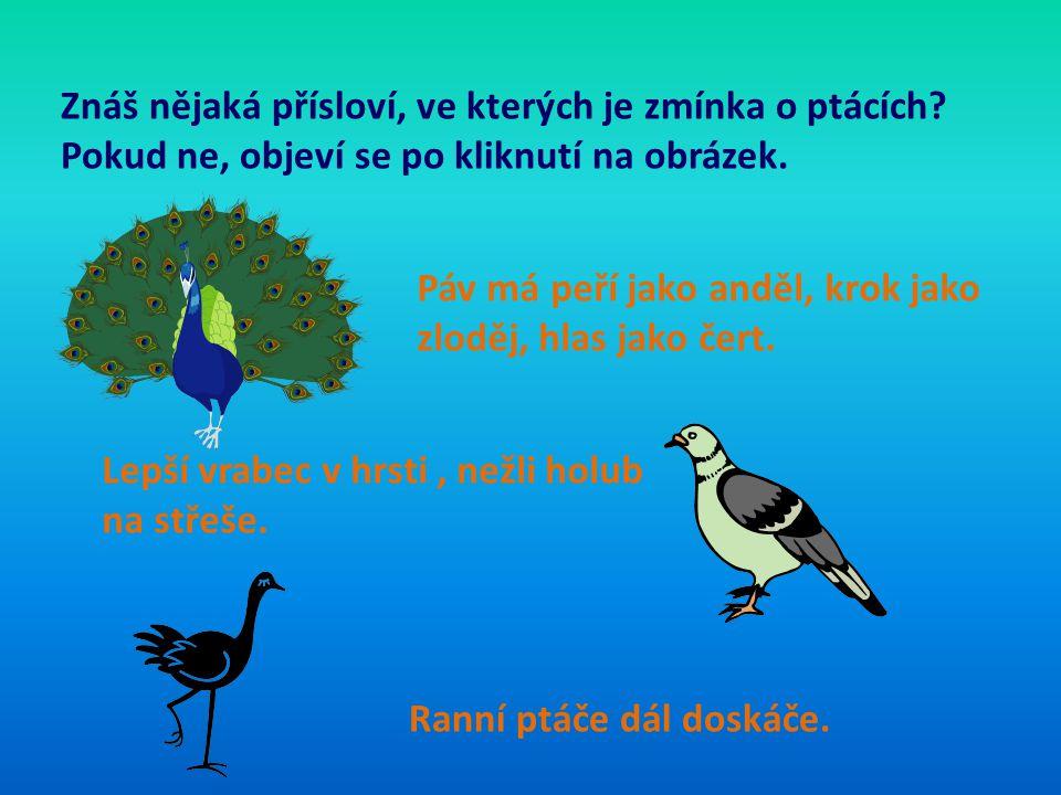 Znáš nějaká přísloví, ve kterých je zmínka o ptácích? Pokud ne, objeví se po kliknutí na obrázek. Páv má peří jako anděl, krok jako zloděj, hlas jako