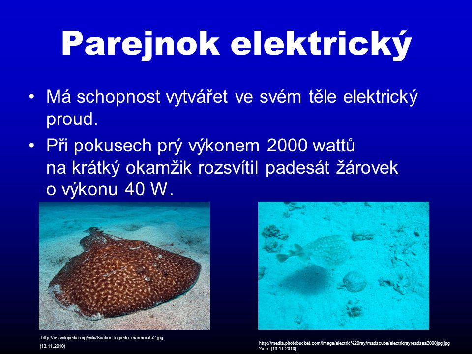 Trnucha modroskvrnná Dorůstá délky 70 cm.Její hmotnost je zhruba okolo 30 kg.