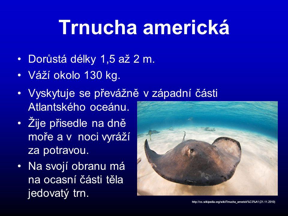 Trnucha americká Dorůstá délky 1,5 až 2 m.Váží okolo 130 kg.