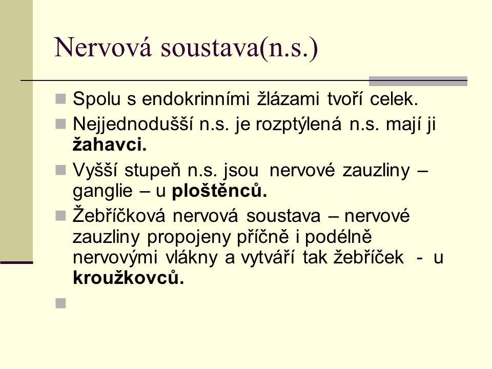 Nervová soustava(n.s.) Spolu s endokrinními žlázami tvoří celek. Nejjednodušší n.s. je rozptýlená n.s. mají ji žahavci. Vyšší stupeň n.s. jsou nervové