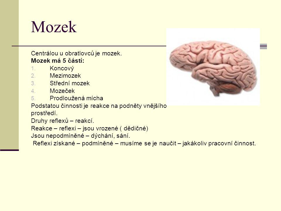 Mozek Centrálou u obratlovců je mozek. Mozek má 5 částí: 1. Koncový 2. Mezimozek 3. Střední mozek 4. Mozeček 5. Prodloužená mícha Podstatou činnosti j