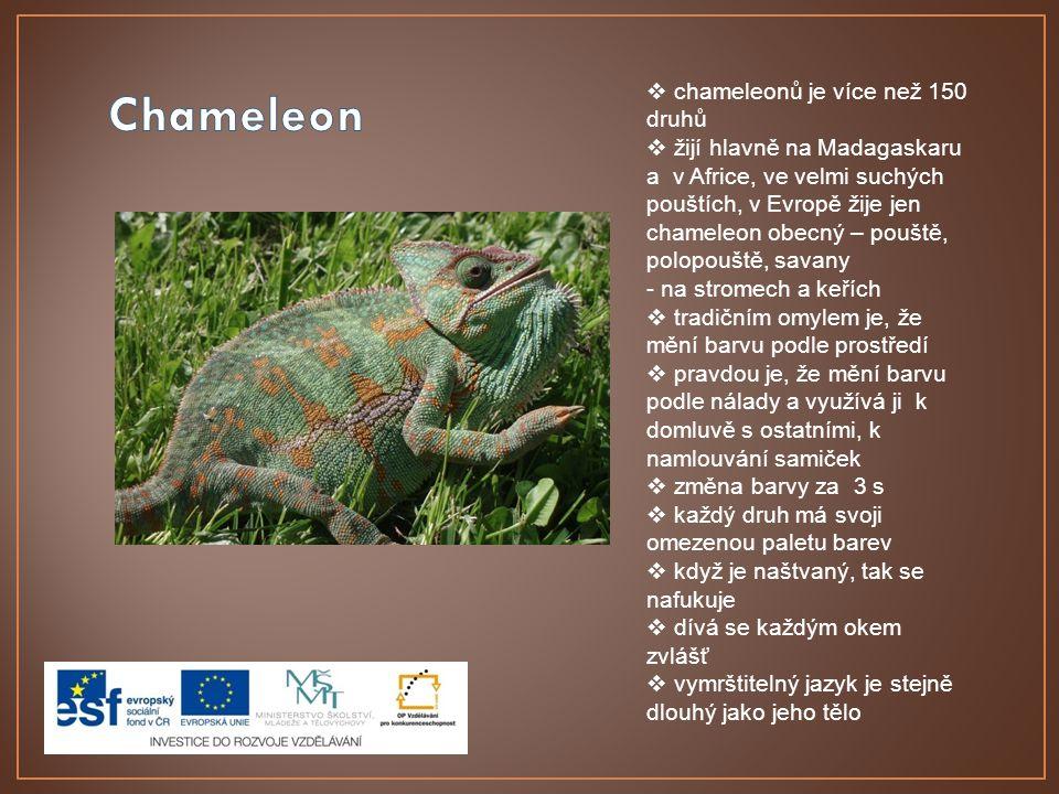  chameleonů je více než 150 druhů  žijí hlavně na Madagaskaru a v Africe, ve velmi suchých pouštích, v Evropě žije jen chameleon obecný – pouště, polopouště, savany - na stromech a keřích  tradičním omylem je, že mění barvu podle prostředí  pravdou je, že mění barvu podle nálady a využívá ji k domluvě s ostatními, k namlouvání samiček  změna barvy za 3 s  každý druh má svoji omezenou paletu barev  když je naštvaný, tak se nafukuje  dívá se každým okem zvlášť  vymrštitelný jazyk je stejně dlouhý jako jeho tělo